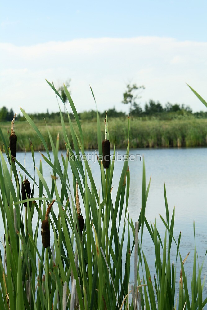 Cattails in the Breeze by kristijacobsen