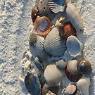 Sea Shells and Sand I-Phone Cover by DebbieCHayes