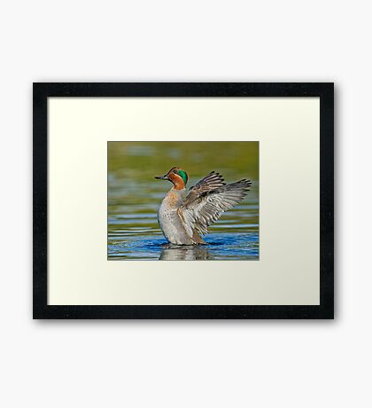 Wing flapping teal Framed Print