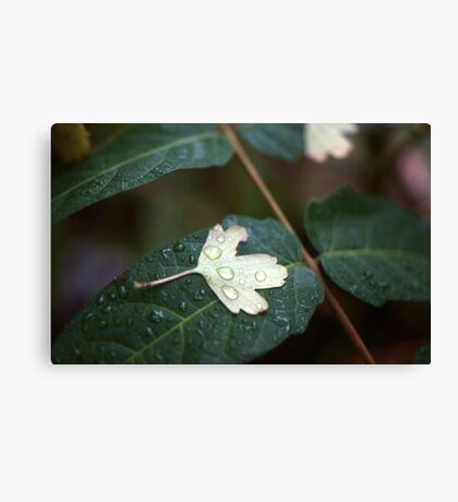 Leaf on Leaf Canvas Print