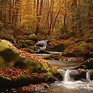 smoky mountain fall by dc witmer