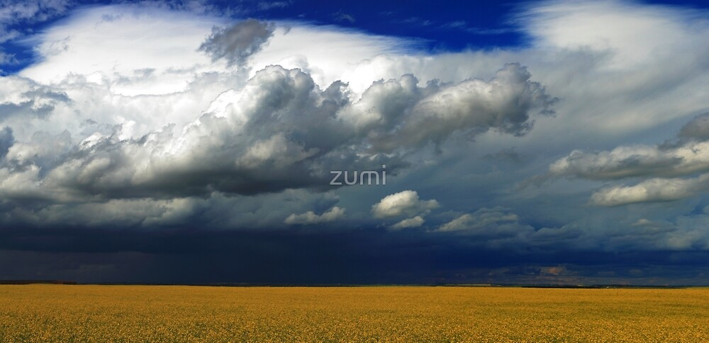 Storm over canola by zumi