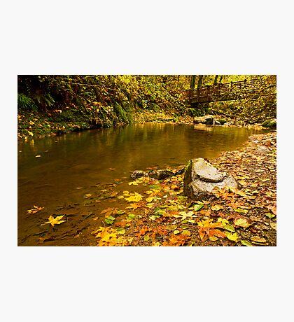 McDowell Creek Landscape Photographic Print