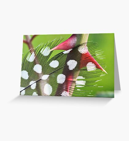Point the Feather Greeting Card