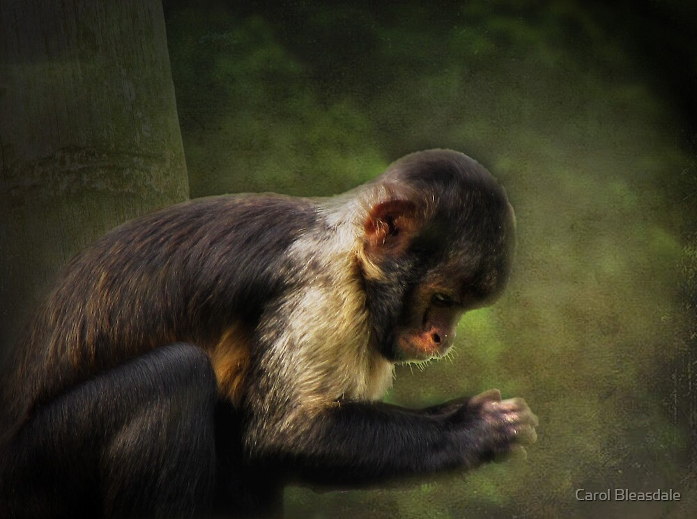 Concentration by Carol Bleasdale