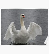 White Winged Beauty Poster
