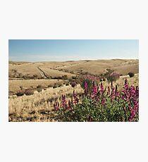 Gammon Ranges S.A Photographic Print