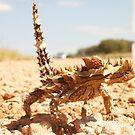 Thorny Devil Lizard by Alex Colcheedas