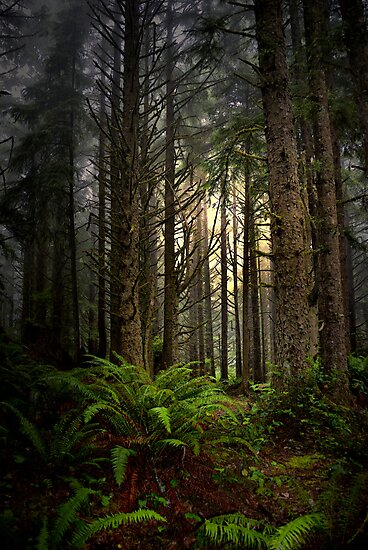 Light In The Dark by Charles & Patricia   Harkins ~ Picture Oregon