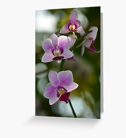 Purple and White Orchid Spray Greeting Card