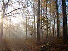 The Autumn Woods Awaken by MotherNature