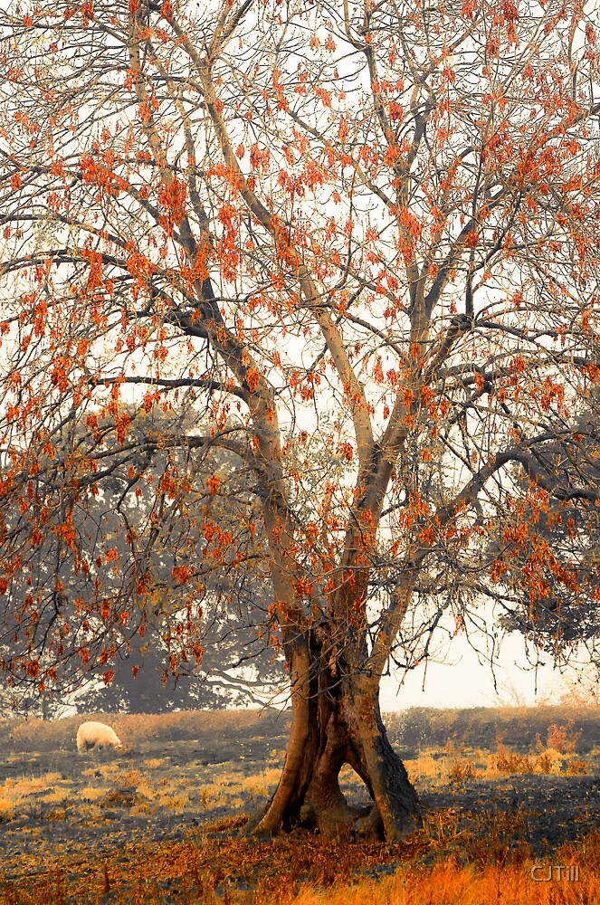 Autumn with a Difference.  by CJTill
