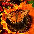 Happy Fall Ya'll by Brenda Burnett