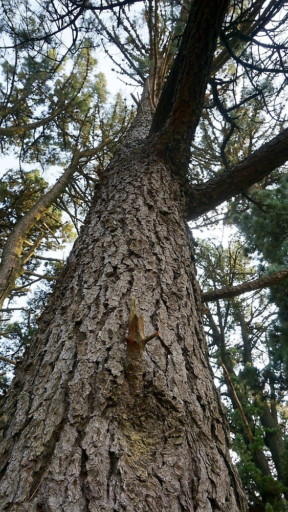 Tree 1 by brujitanegrita