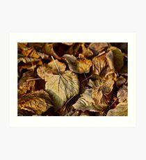 5 ★★★★★ . Poesie d'amore e  e Jardins en Automne . by vicomte Brown Sugar. Vive la France . Favorites: 2 Views: 325 . thx! Art Print