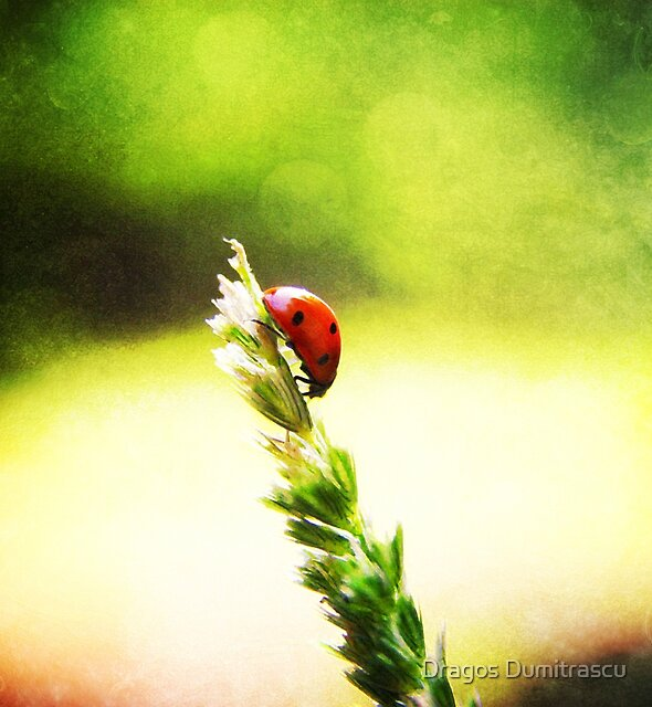 Ladybug High descent by Dragos Dumitrascu