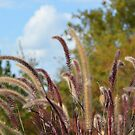 Beautiful Grass by Paula Betz