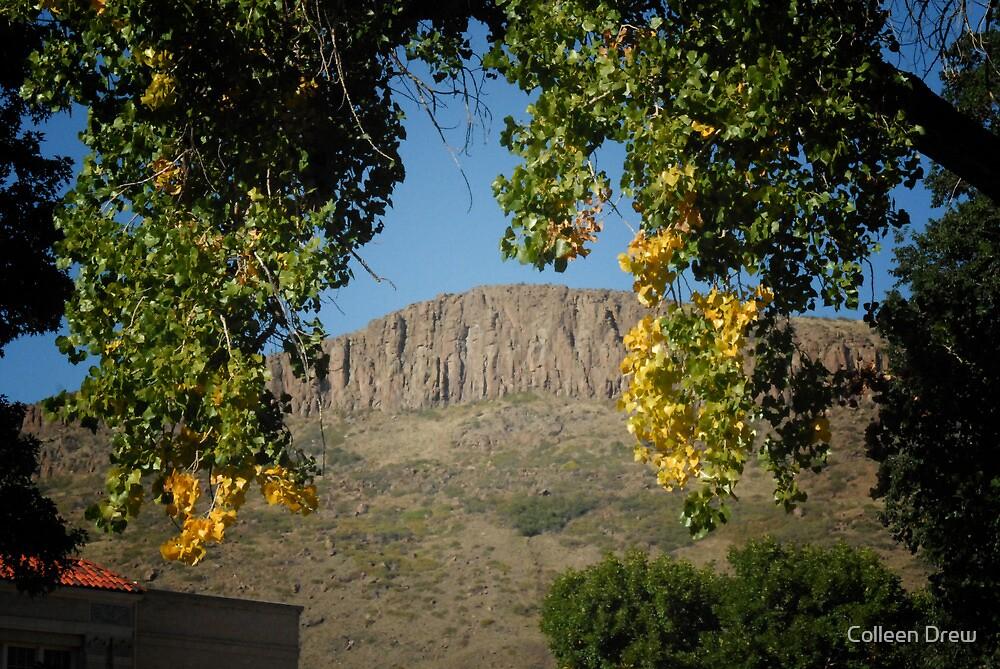 Golden Colorado by Colleen Drew