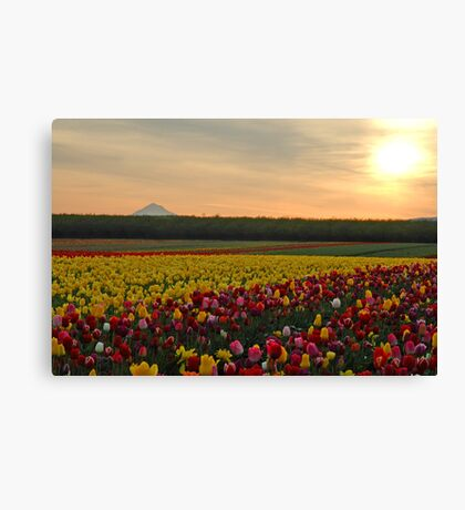 Tulips At Sunrise Canvas Print