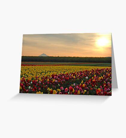 Tulips At Sunrise Greeting Card