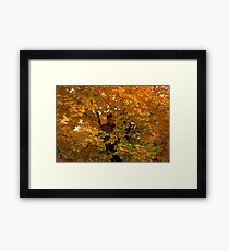 Boy in Tree Framed Print