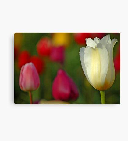 Tulipscape Canvas Print
