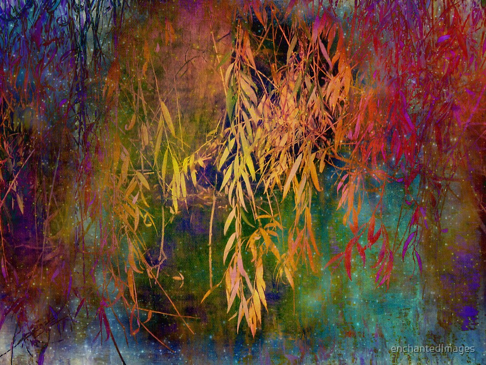Wild Willow by enchantedImages