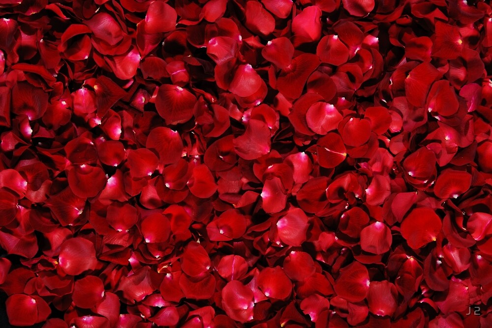 Red Rose Petals by J 2