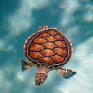 Turtle Turtle by Keri Harrish