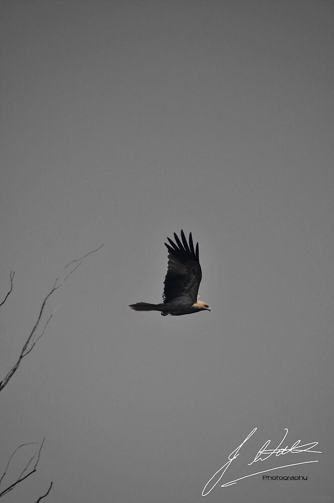 eagle in flight by jwatts