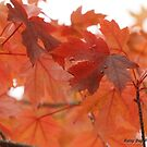 Raindrops keep dropping on my leaves.... by Rainydayphotos