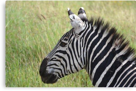 Zebra  by PeneJane