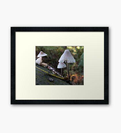 Bonnet Bell Cap Framed Print