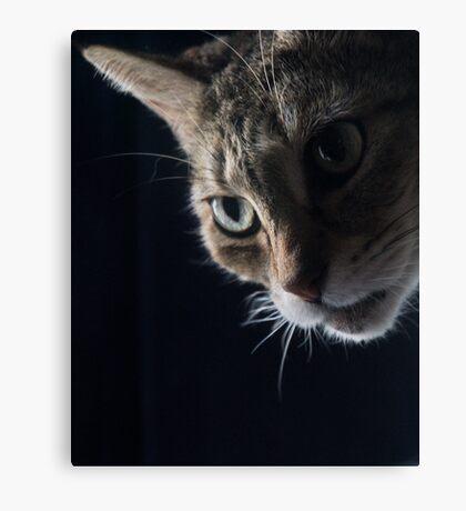Looking Around Canvas Print