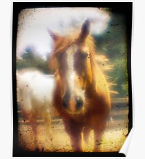 Lensbaby Horse Poster