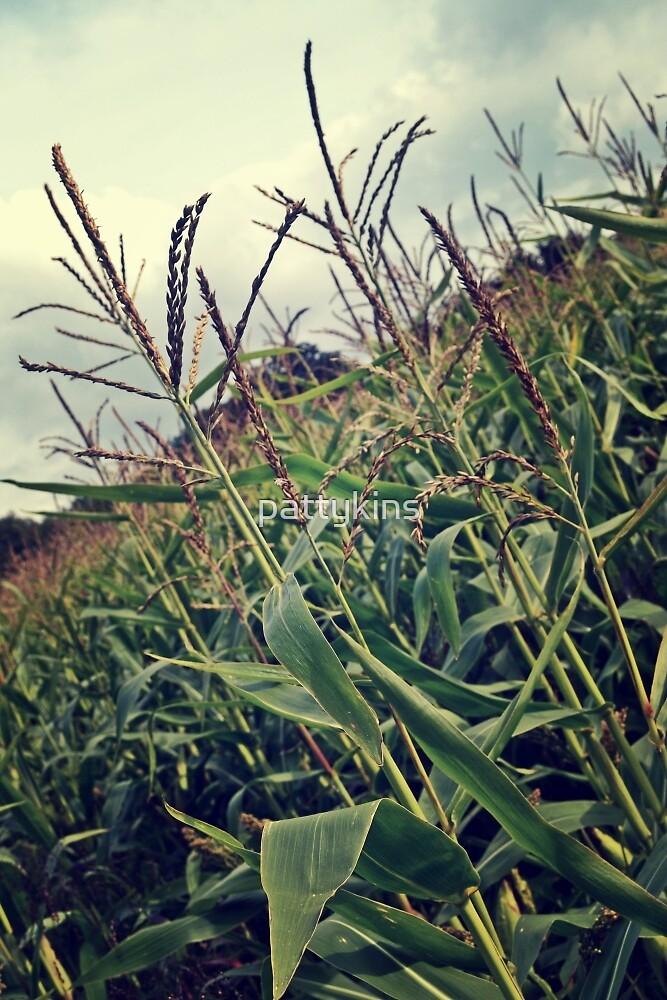 Corn Field by pattykins