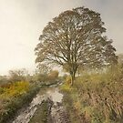 A Misty Autumn Morning In Yorkshire by patrixpix