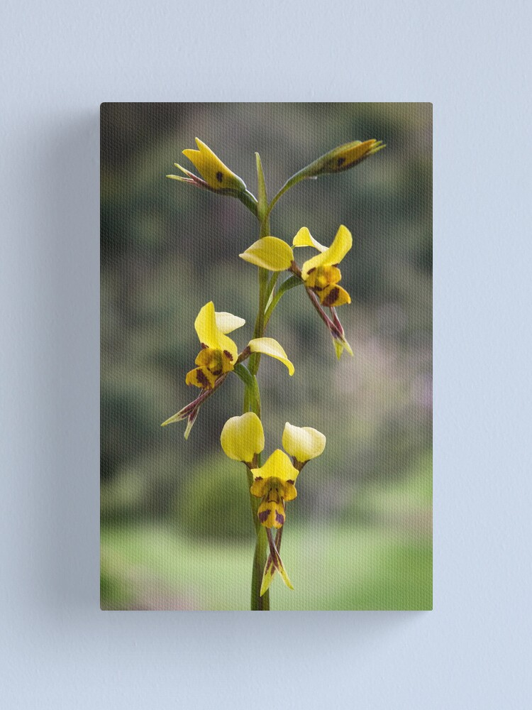 Alternate view of Australian wild orchid flower Canvas Print