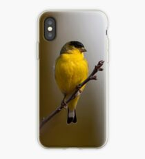 Lesser Goldfinch iPhone Case iPhone Case