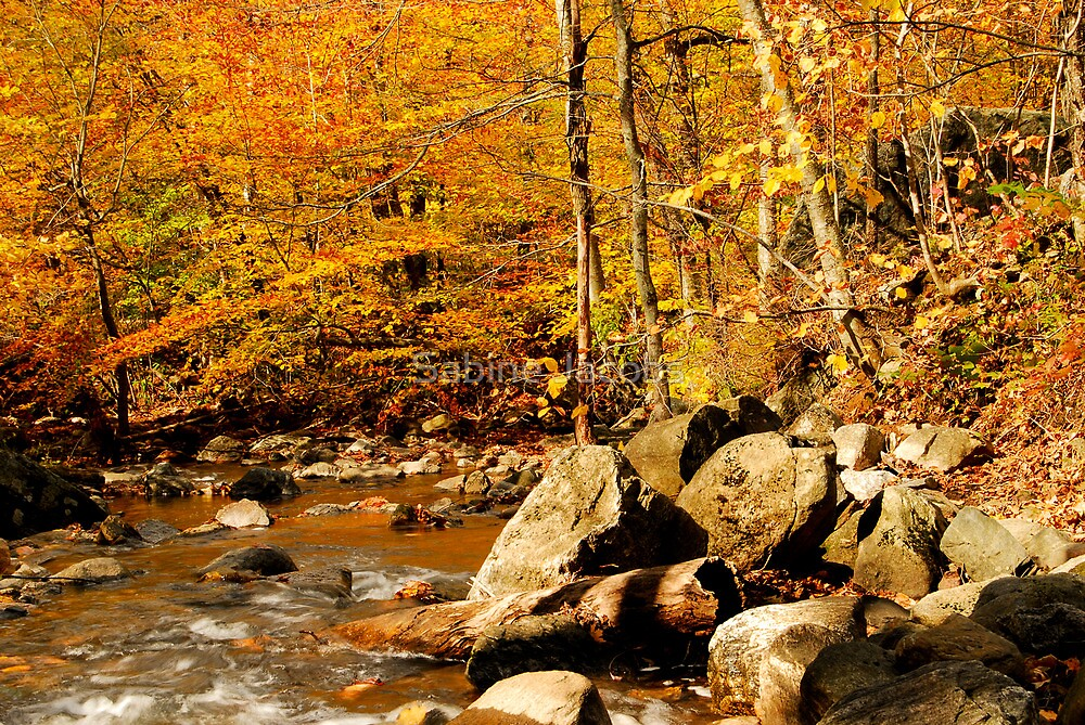 Macedonia Brook ~ Connecticut, USA by Sabine Jacobs