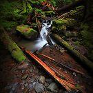 Ramona Creek II by Tula Top