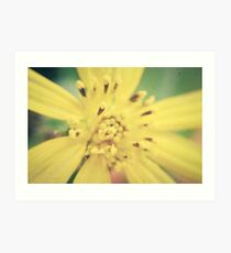 Yellow Blossom Art Print