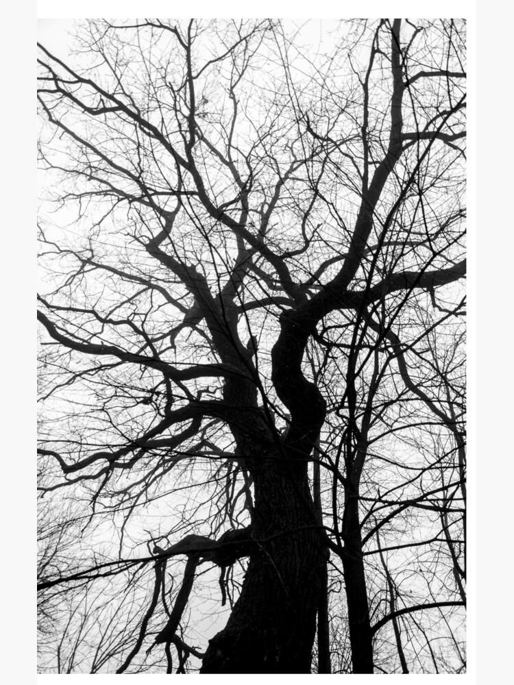 tree by imaruseru