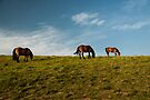 Keep the horses on the grass by Marcel Ilie