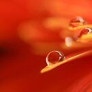 orange droplets by lensbaby