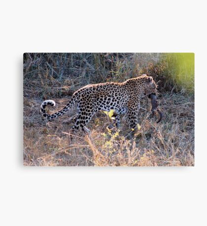 JUST A TINY BITE TO EAT ! - THE LEOPARD – Panthera pardus Canvas Print