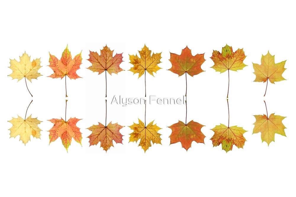 Autumn Maple Leaves by Alyson Fennell