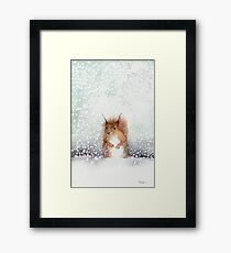Red Squirrel in the Snow, or, Who Stole My Nuts? Framed Print