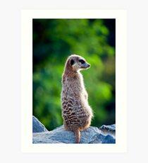 Meerkat! Art Print