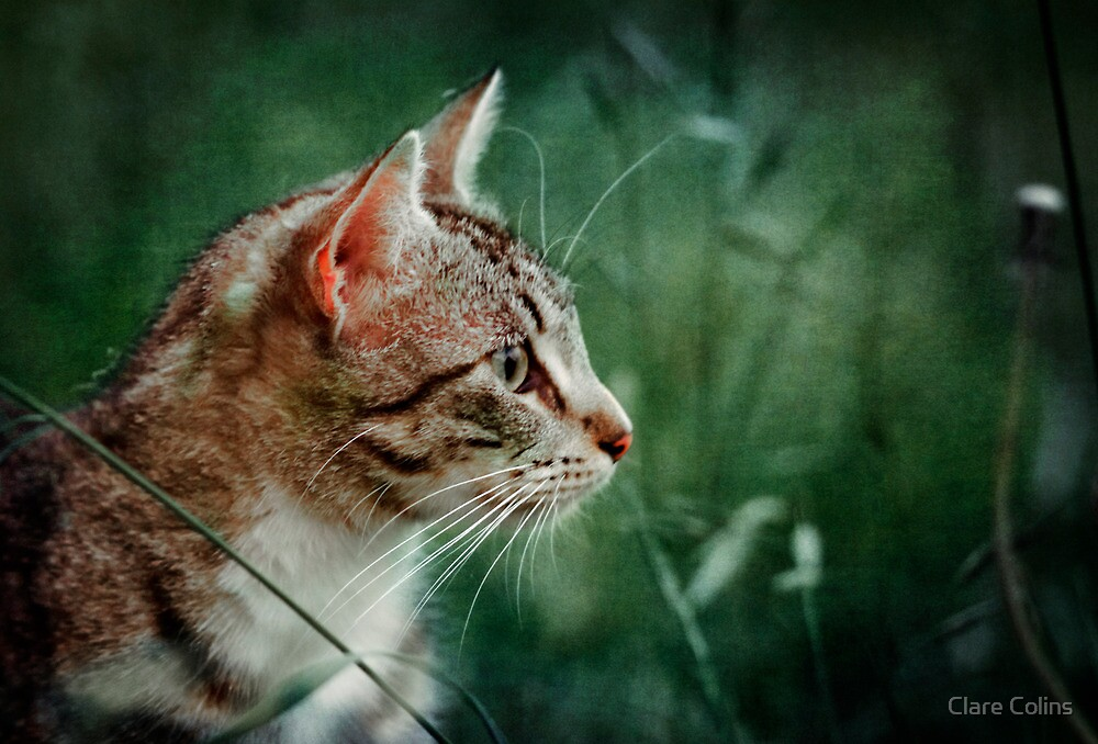 a tabby cat in the grass by Clare Colins